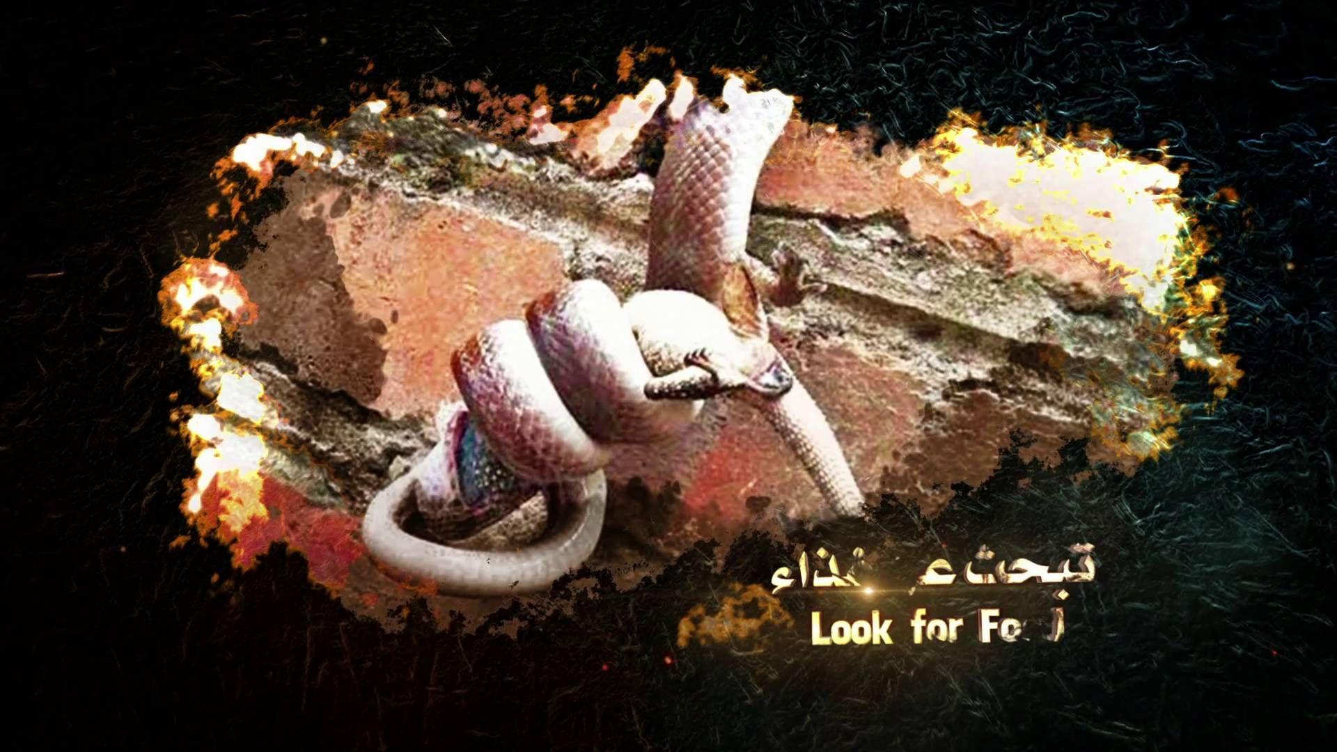 تحميل كتاب آيات الله في خلق الحيوانات البري ة والبحري ة وبعثها وحسابها Pdf Streaming Book Cover Texts