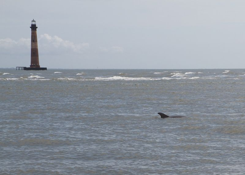 Dolphins Are Pointing Out Possible Pollution in Charleston
