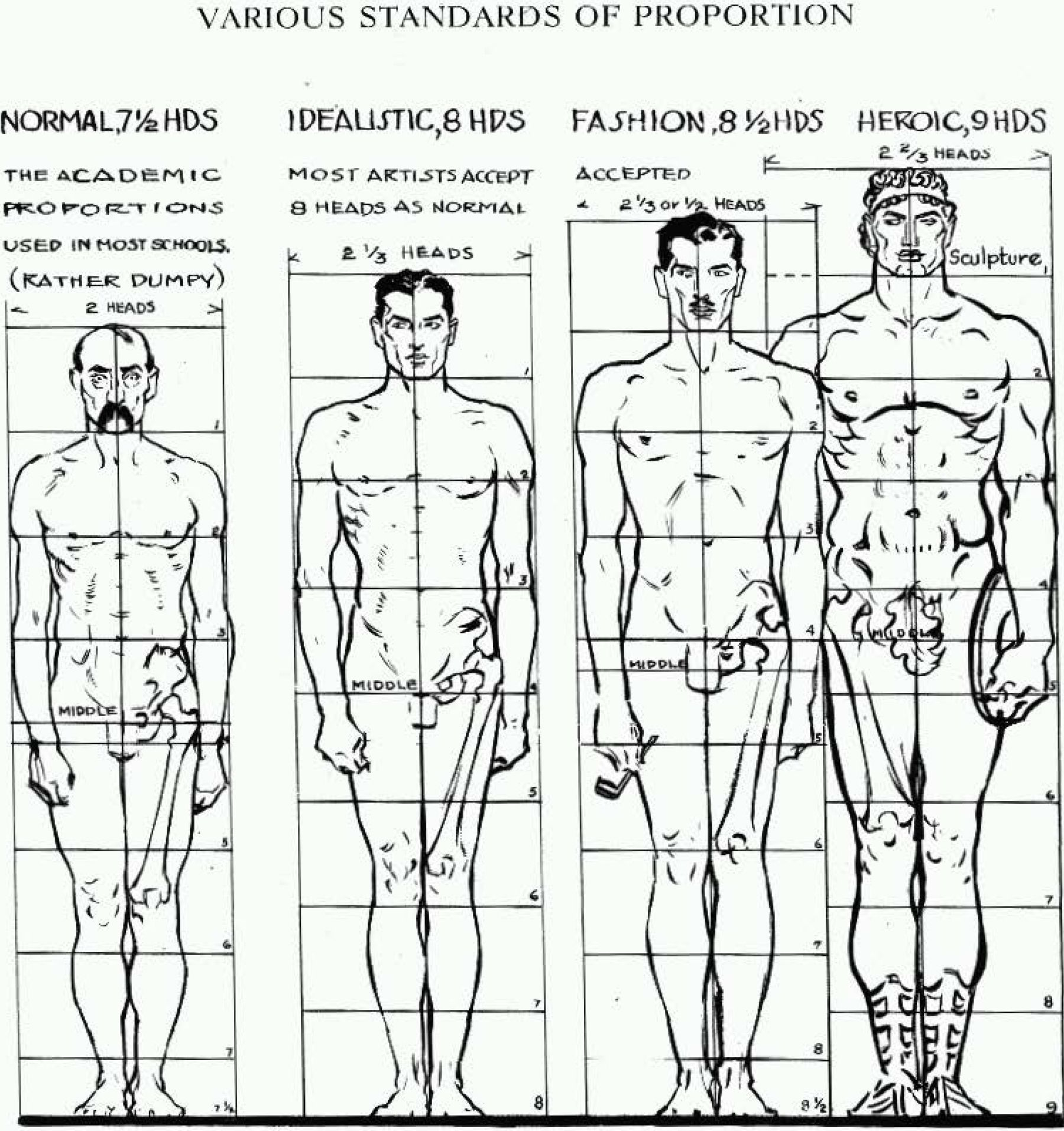 Proportions of the Human Figure : How to Draw the Human Figure in ...