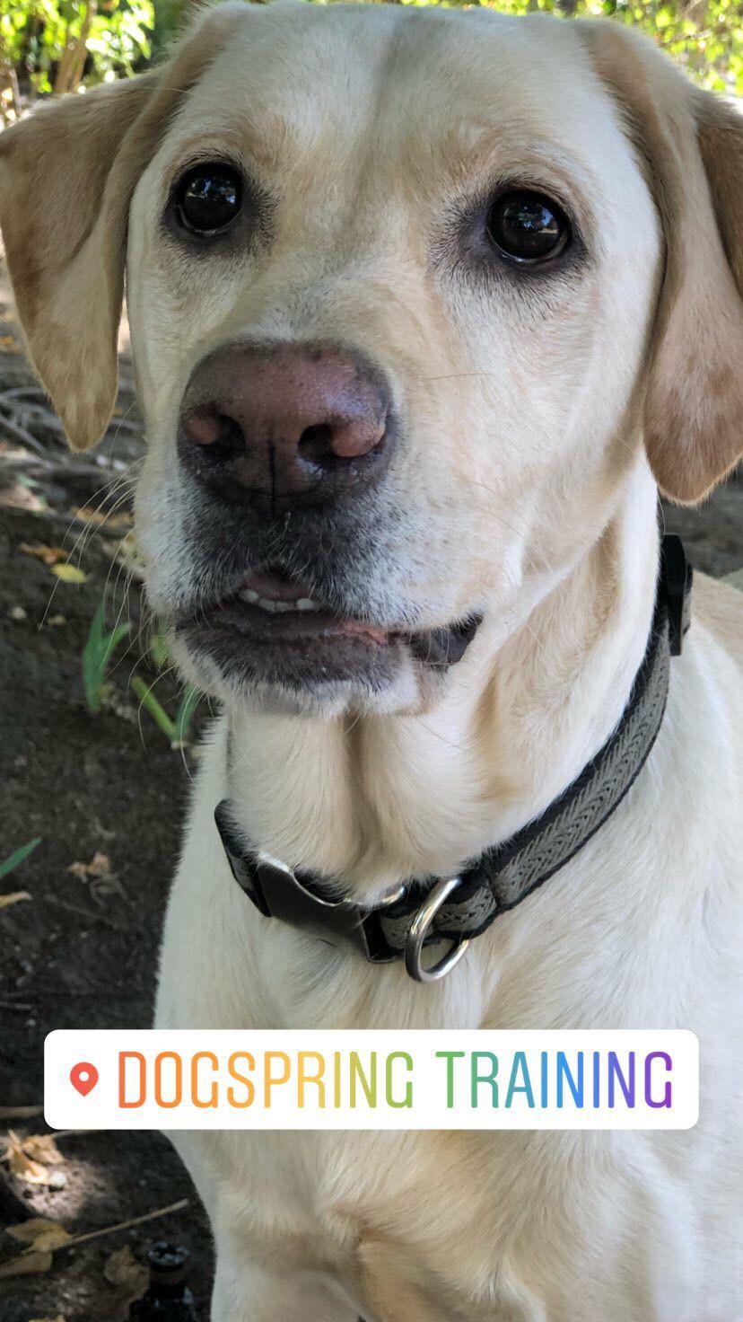 dog training fresno