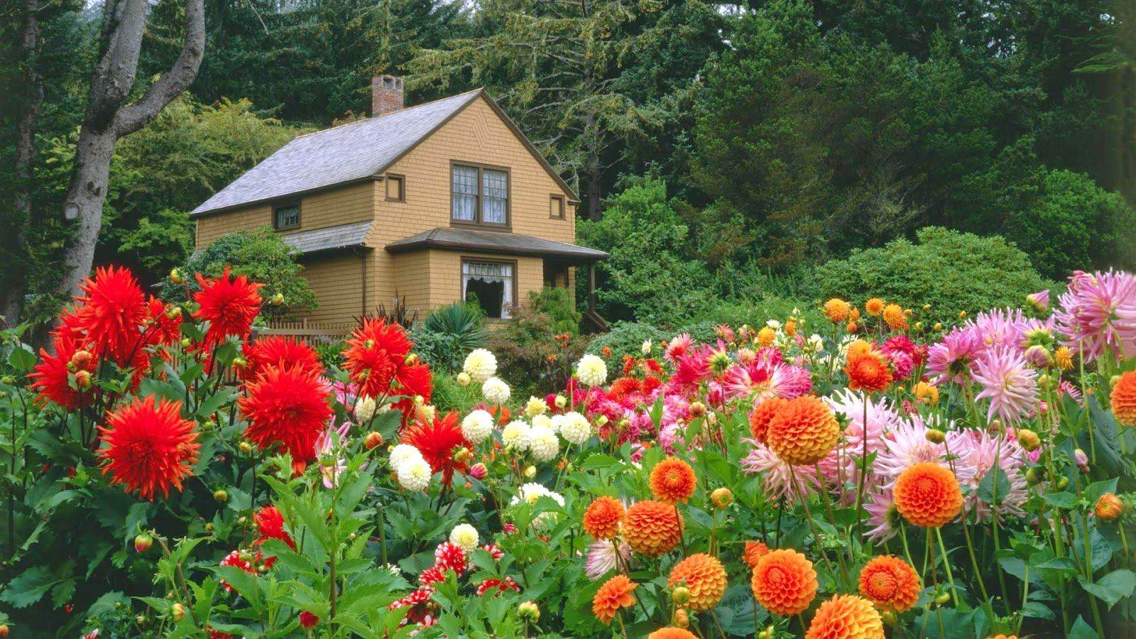 Garden Hd Images Free Download Flower Garden Wallpaper