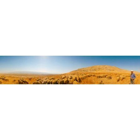 Shepherd standing with flock of sheep Jerusalem Israel Canvas Art - Panoramic Images (24 x 5)