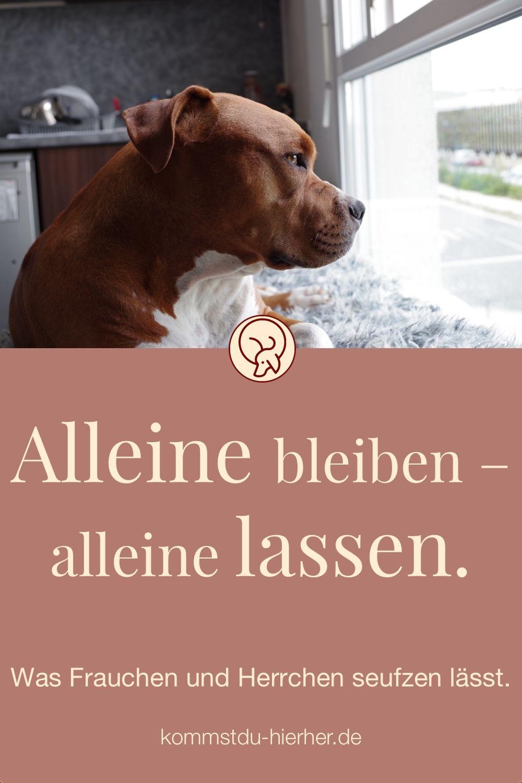 Hundeverhalten   Hund alleine lassen   Hund in der Wohnung   Hunde Erziehung   Hundehalter #Hundeerziehung #Hundehalter # Hund