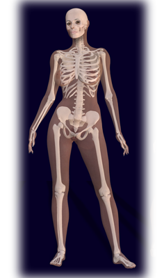 female human skeleton | human skeleton | pinterest | results, Skeleton