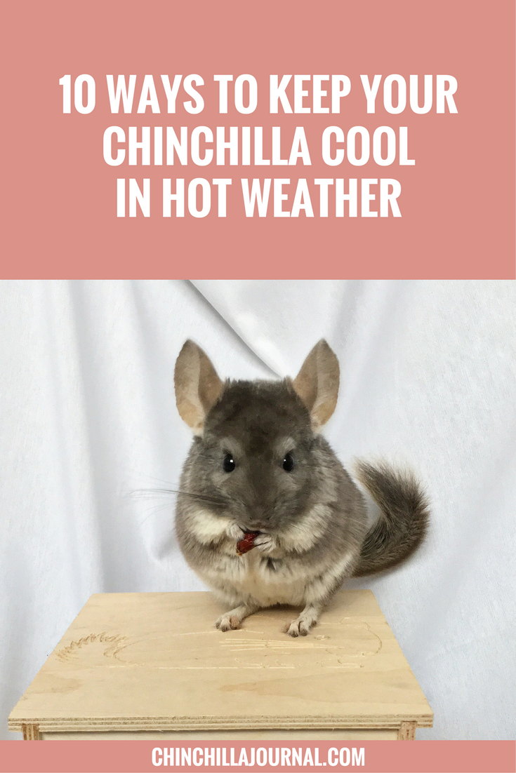 10 Ways To Keep Your Chinchilla Cool In Hot Weather