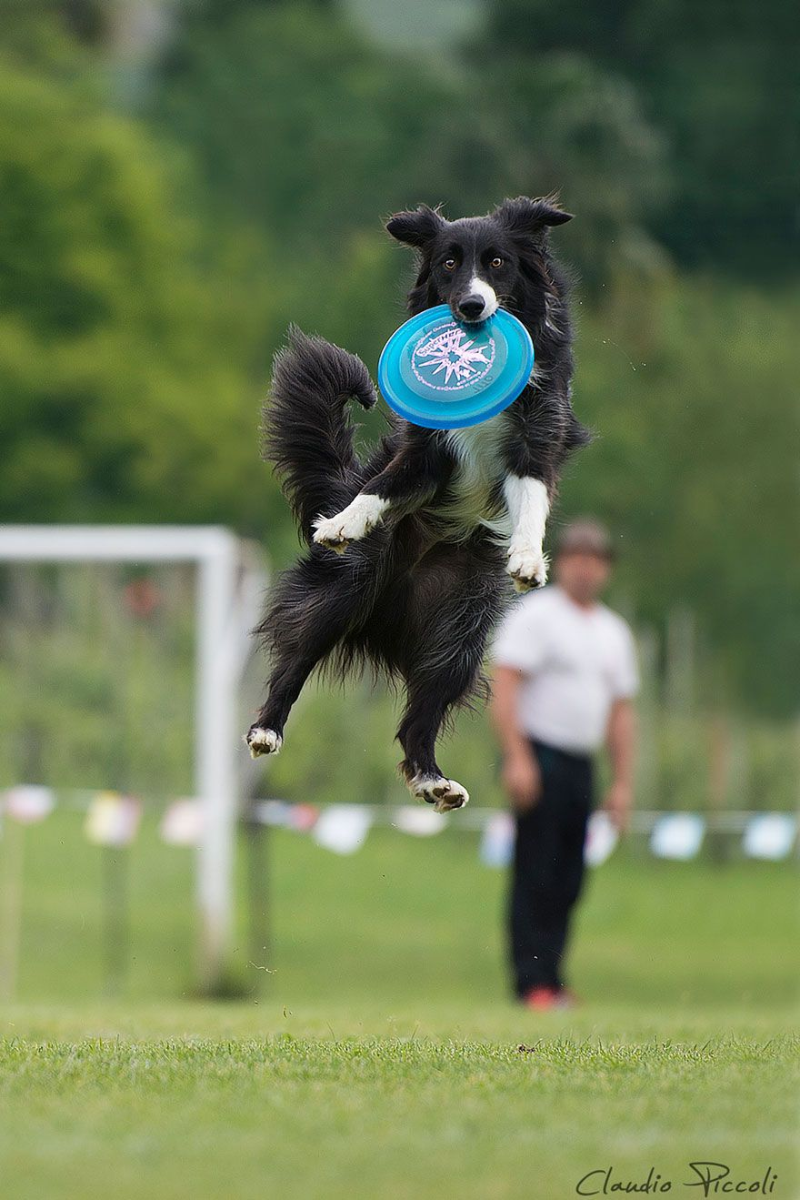 Dogs can fly in funny photo series by claudio piccoli pics