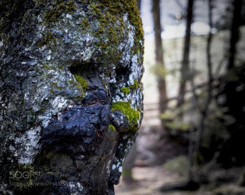 Tree face by ErwinSchrder1  IFTTT 500px