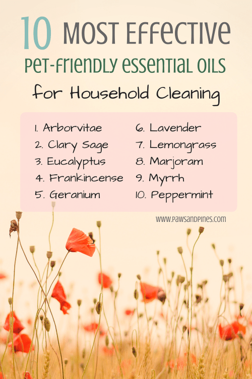 10 Most Effective (PetFriendly) Essential Oils for Home