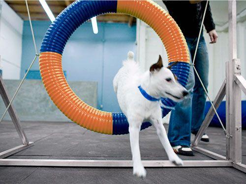 Make Pet Exercise More Fun Pets Outdoor Dog Runs Pet Clinic