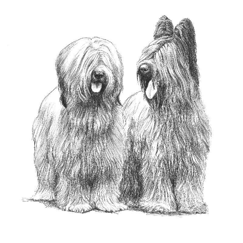 Zwiazek Kynologiczny W Polsce O Katowice Honden Portretten Honden Schilderijen Honden