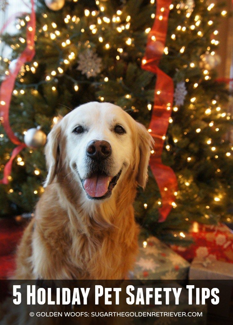 5 Holiday Pet Safety Tips + Petco Infographic Feed This