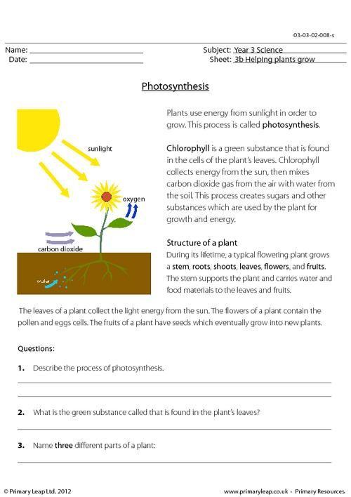 Primaryleap Photosynthesis Worksheet School Pinte