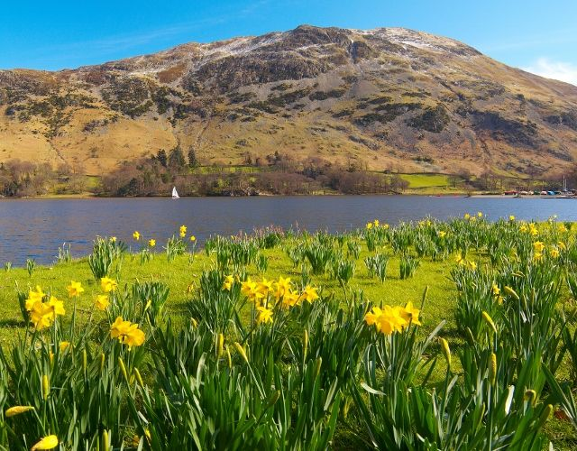 "Ullswater, The Lake District, England.   ""I wandered lonely as a cloud  That floats on high o'er vales and hills,  When all at once I saw a crowd,  A host, of golden daffodils;  Beside the lake, beneath the trees,  Fluttering and dancing in the breeze."" [William Wordsworth]."