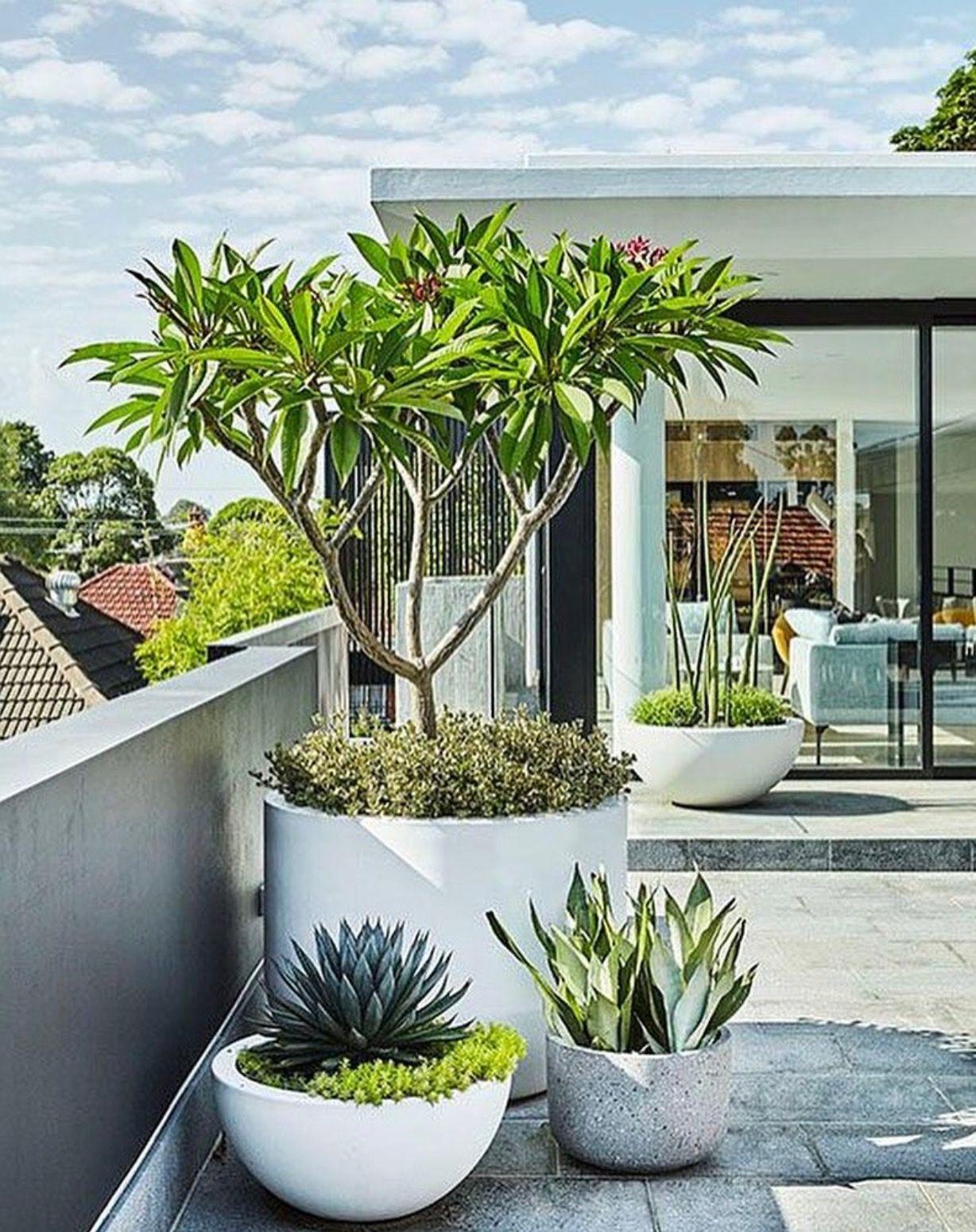 pot plants house garden pinterest plants gardens and garden ideas. Black Bedroom Furniture Sets. Home Design Ideas