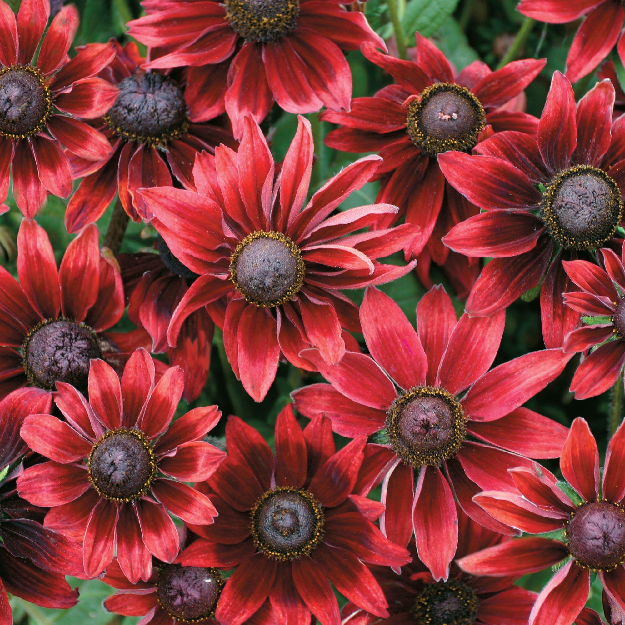 241d0dcf66155ca4a8653db9d3abb0b0 Luxe De Fleurs De Jardin Des Idées