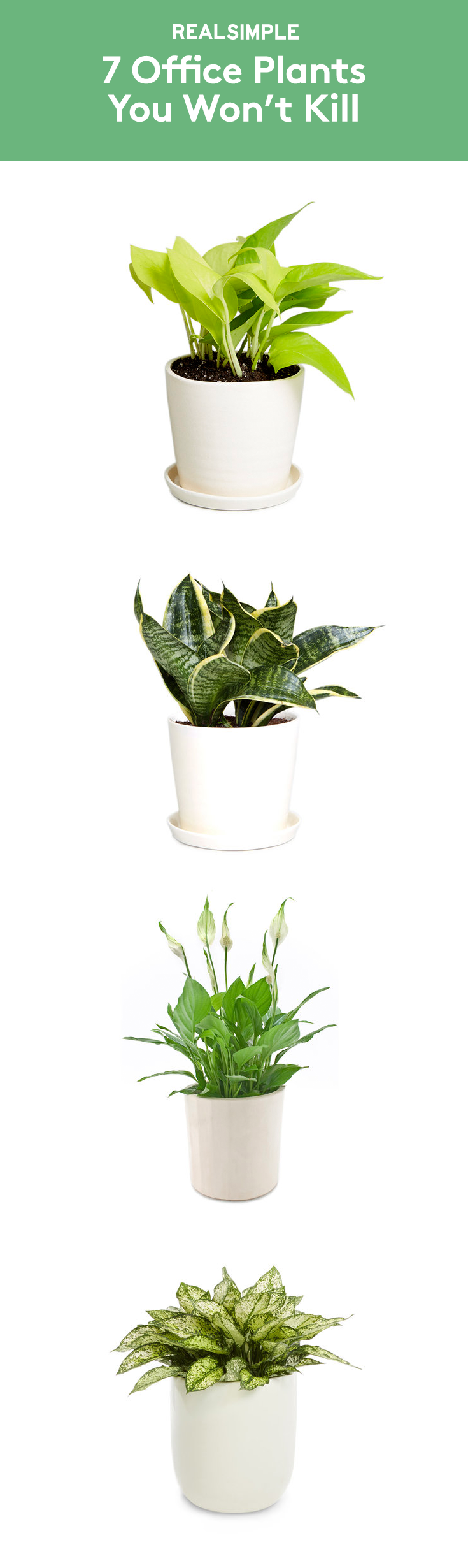 best indoor plants for office. Christopher Satch, The Sill\u0027s In-house Plant Expert, Shares Best Indoor Plants That Can Withstand Limited Sunlight, Cold Temps, And Little Water. For Office