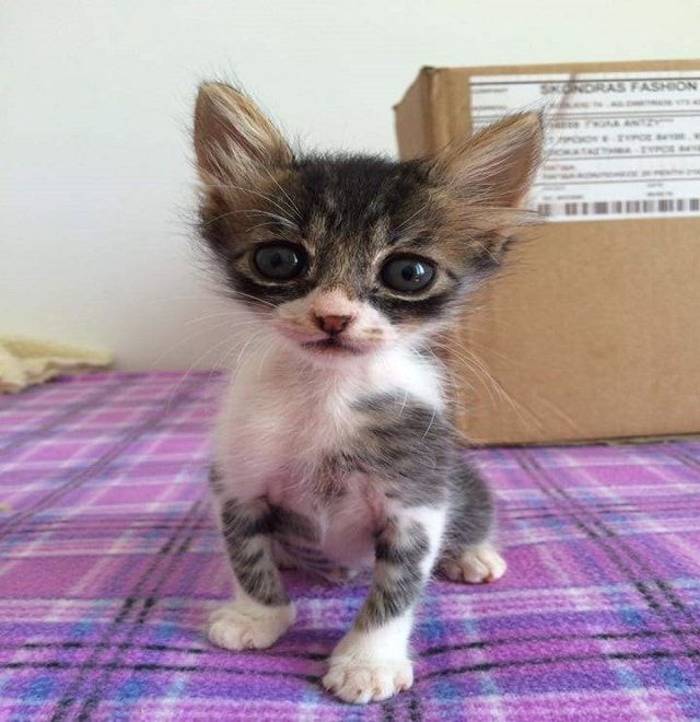 Abandoned Tiny Kitten Found In Field Check Out the 'Then