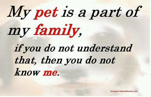 Family Is Family Dog Quotes Animal Quotes Pets
