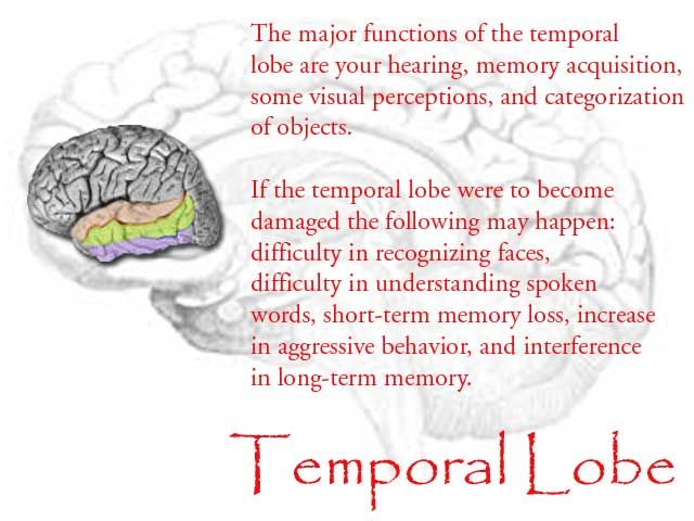 TEMPORAL LOBE FUNCTIONS PDF