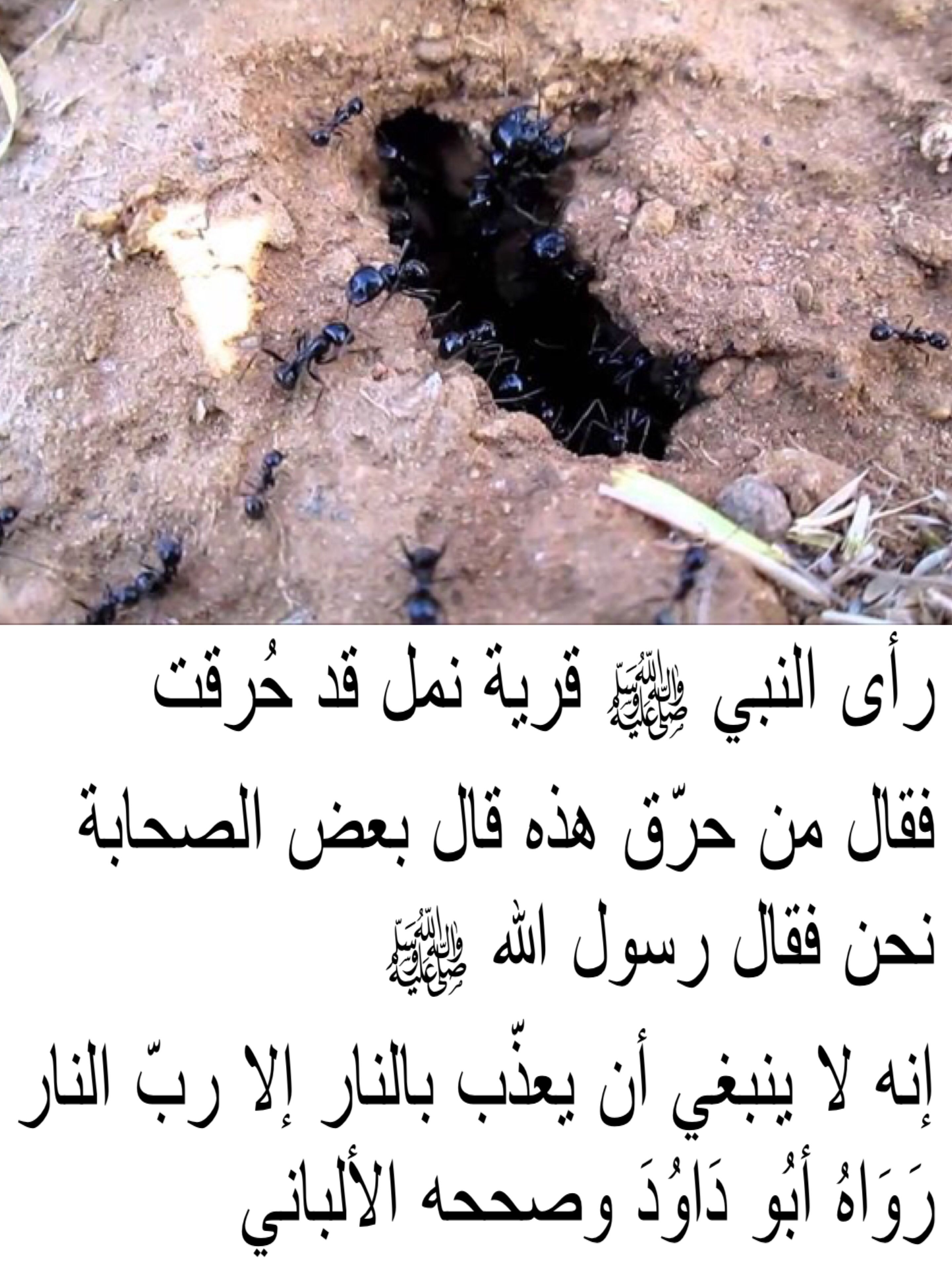 Pin By Al Yamama On Hadith Beef Meat