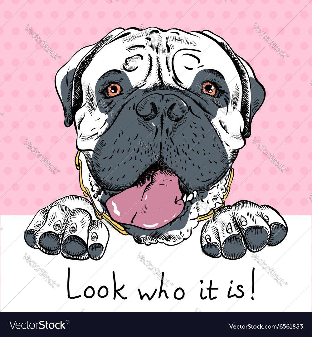 Funny cartoon hipster dog bullmastiff vector image by olgacov