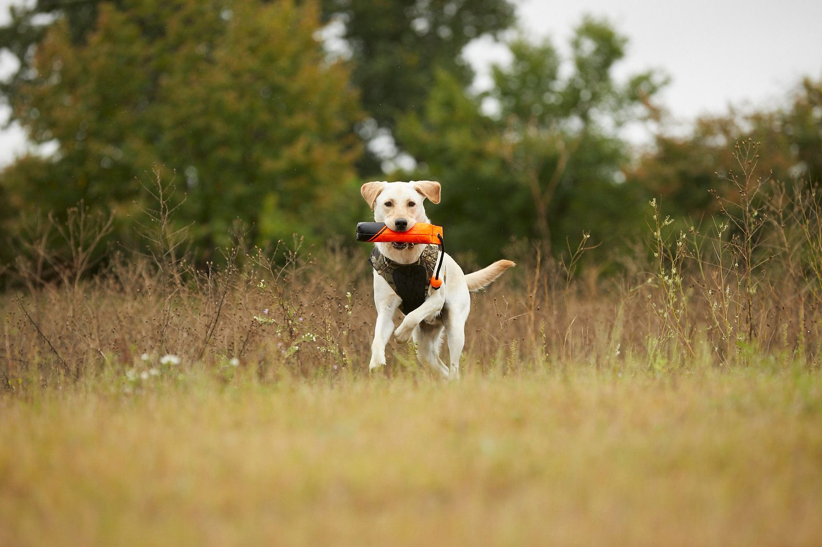 Browning Canvas Training Dummy For Dogs The Most Trusted Name In