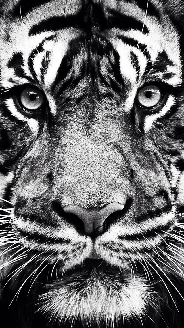 Wallpaper Tigre En 2019 Fond Ecran Animaux Animaux Nature