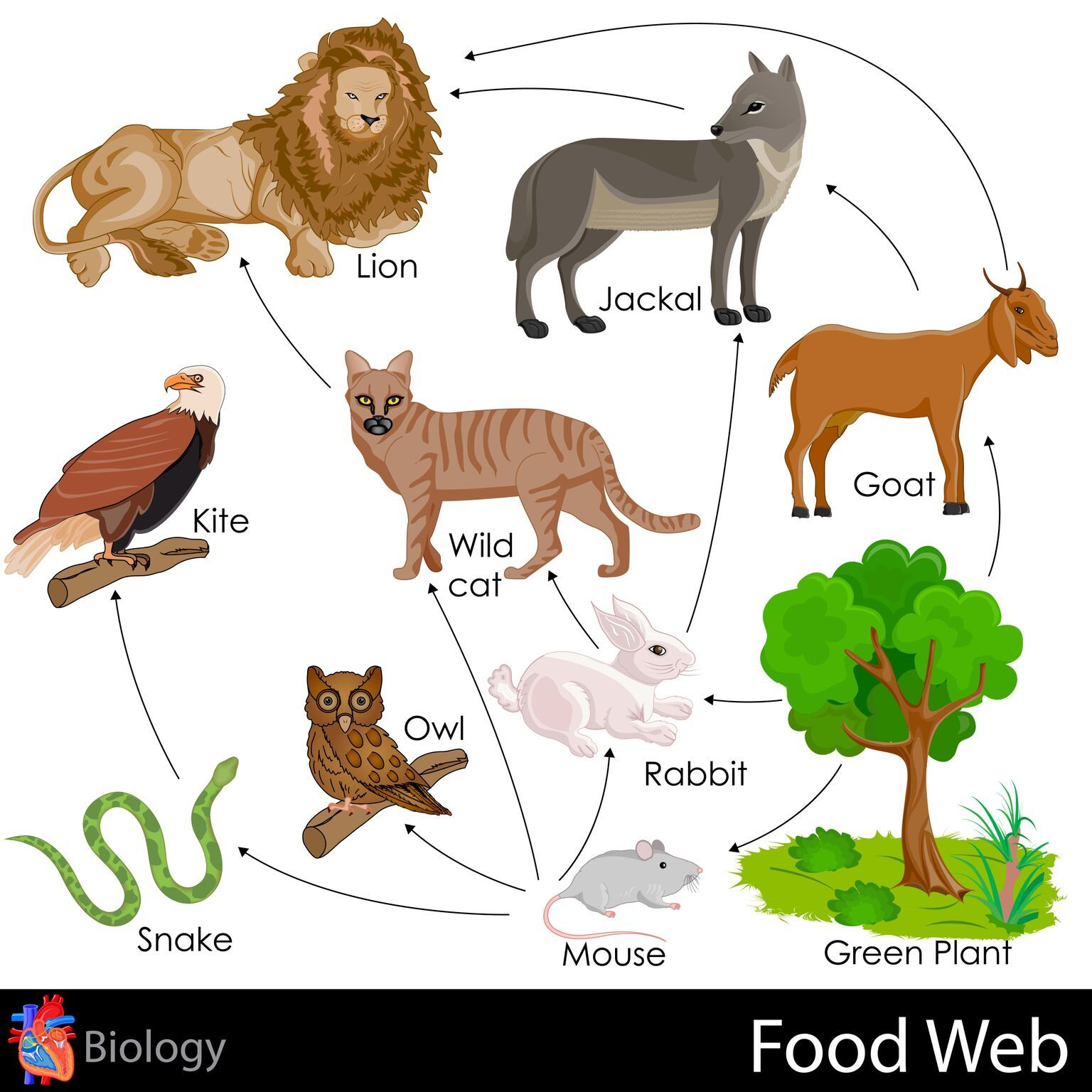 Food Webs In An Ecosystem Science Games