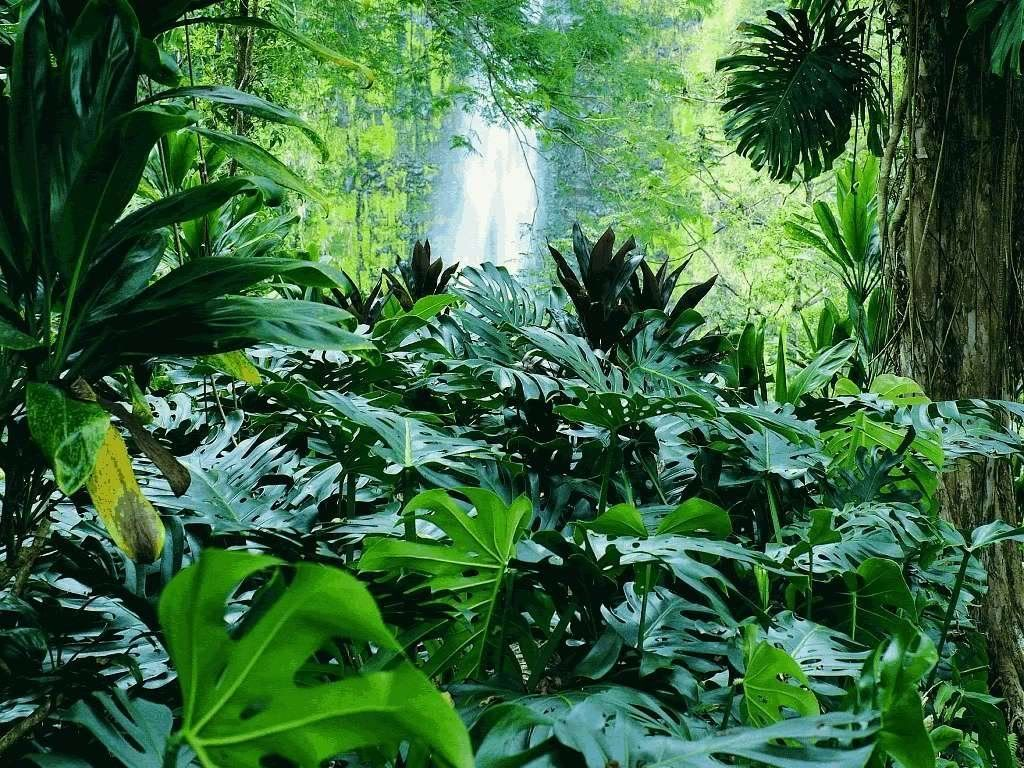 Catarata En La Selva