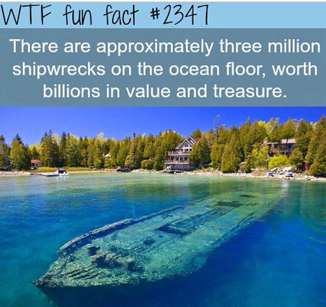 Pin by Kika Rodrigues on WTF Fun Facts | Wtf fun facts ...
