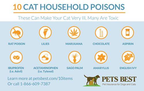 10 Cat Household Poisons Pet Insurance Pet Insurance Reviews Pet Insurance Cost