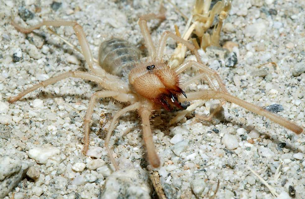 Coachella Valley Preserve | Spider, Real spiders, A bug's life