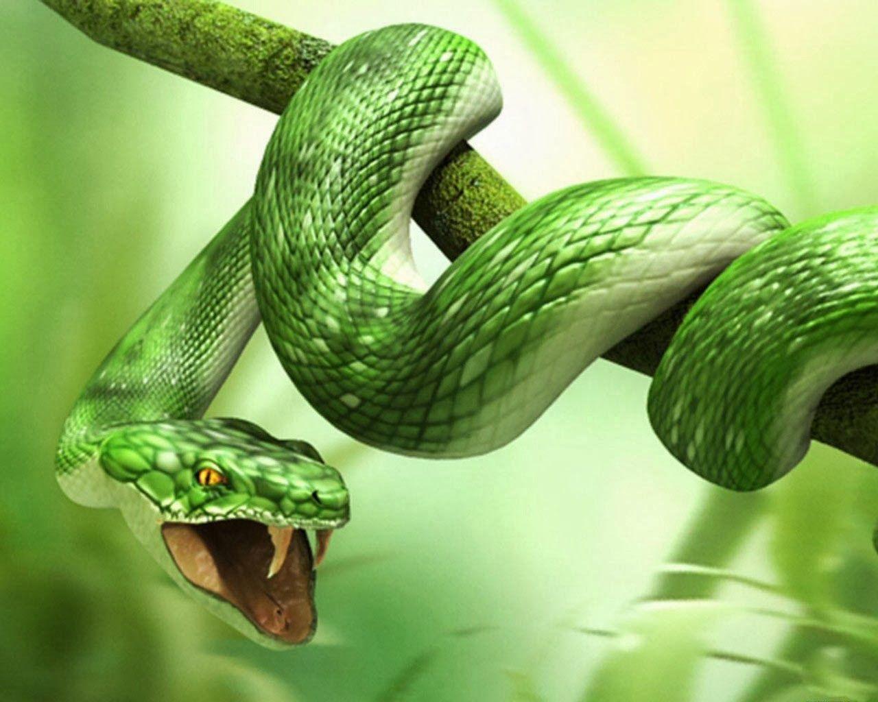 3D Animal Snake & Tiger HD Wallpapers Snake wallpaper, Snake