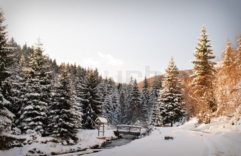 1529011-winter-fir-tree-forest-with-snow-covered-trees-and-path.jpg 800×517 pixels