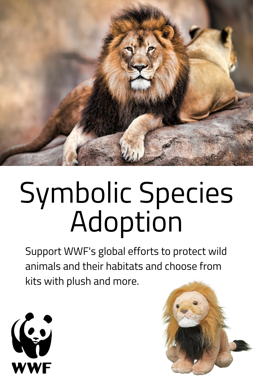 Donate Now to Save endangered Lions and get one step