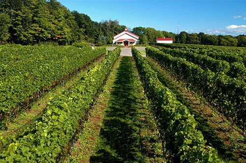 10 Reasons To Drink Local Wine Traverse City Wine Tours Leelanau Old Mission Traverse City Wine Tour Traverse City Wine
