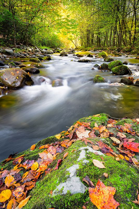 Fall Colors In The Smokies Smoky Mountains Attractions