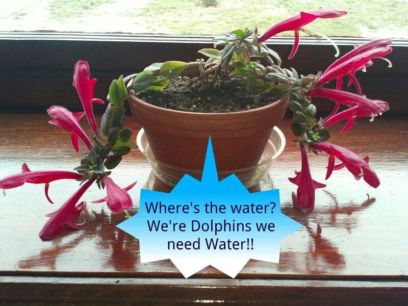 Dolphin plant house plants water plants plants