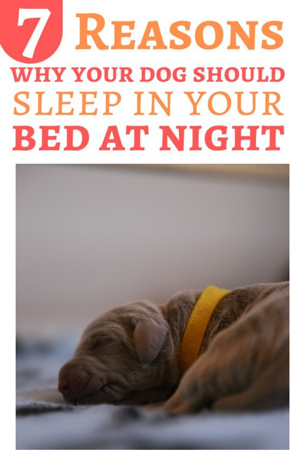 7 Amazing Reasons Why Your Dog Should Sleep In Your Bed At Night Dog Mom Humor Dog Mom Gifts Anxious Dog