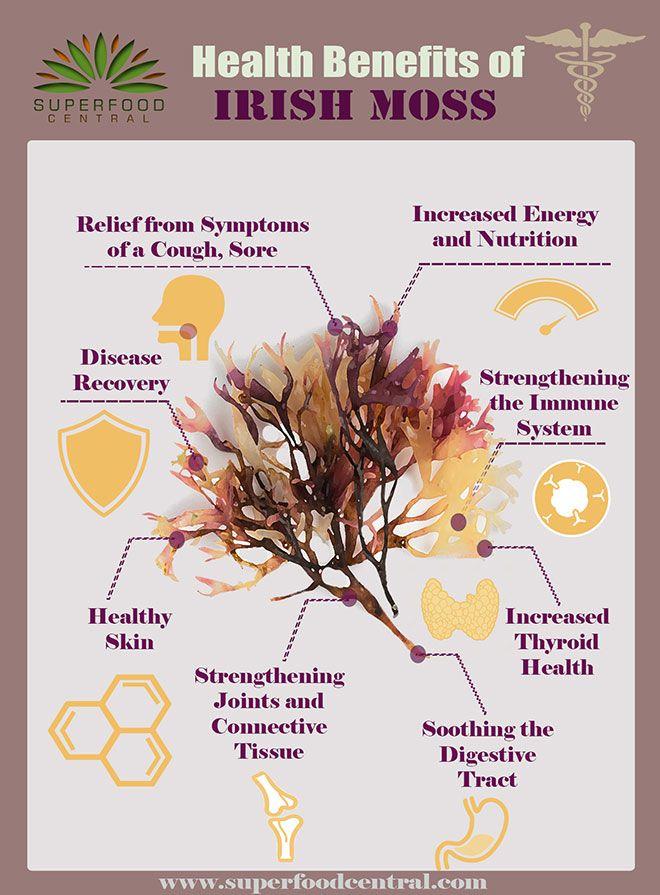 Health Benefits And Side Effects Of Irish Moss Aka Sea Moss Benefits Of Organic Food Hypothyroidism Diet Alkaline Diet Benefits