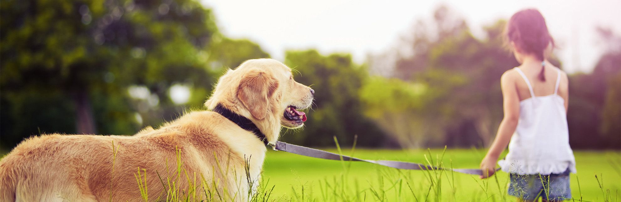 Canine Calorie Calculator (With images) Calorie