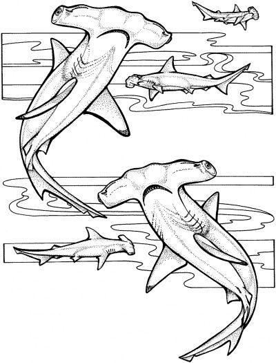 Hammerhead Sharks coloring page | Super Coloring | Shark ...