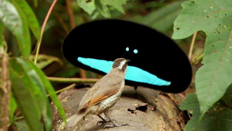 Αποτέλεσμα εικόνας για birds of paradise