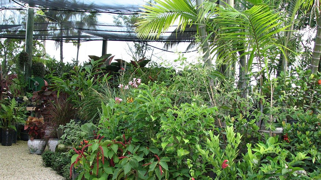 Florida Garden Centers And Nurseries With Images Garden Center Family Garden Garden