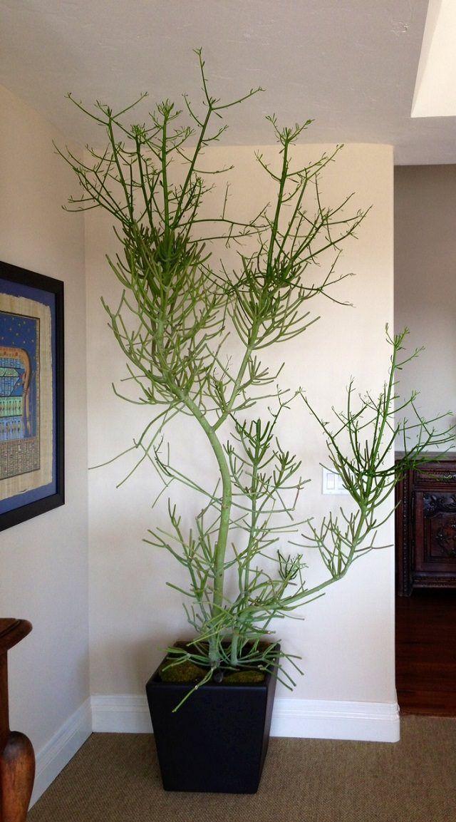 14 Best Indoor Succulents To Grow At Home Balcony Garden