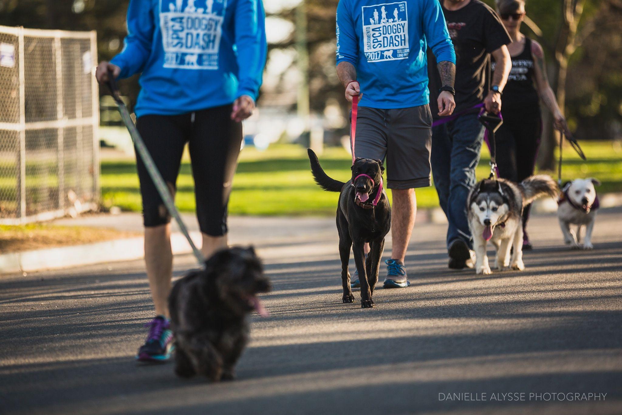 Register For The Sacramento Spca Doggy Dash And Help The Fur