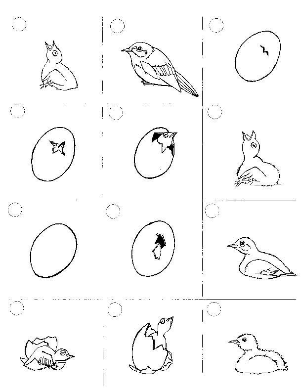 chicken exploring nature educational resource