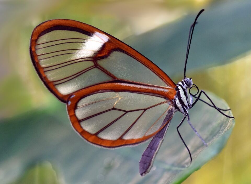 High-Quality Butterfly Wallpapers Full HD 1080P Free ...