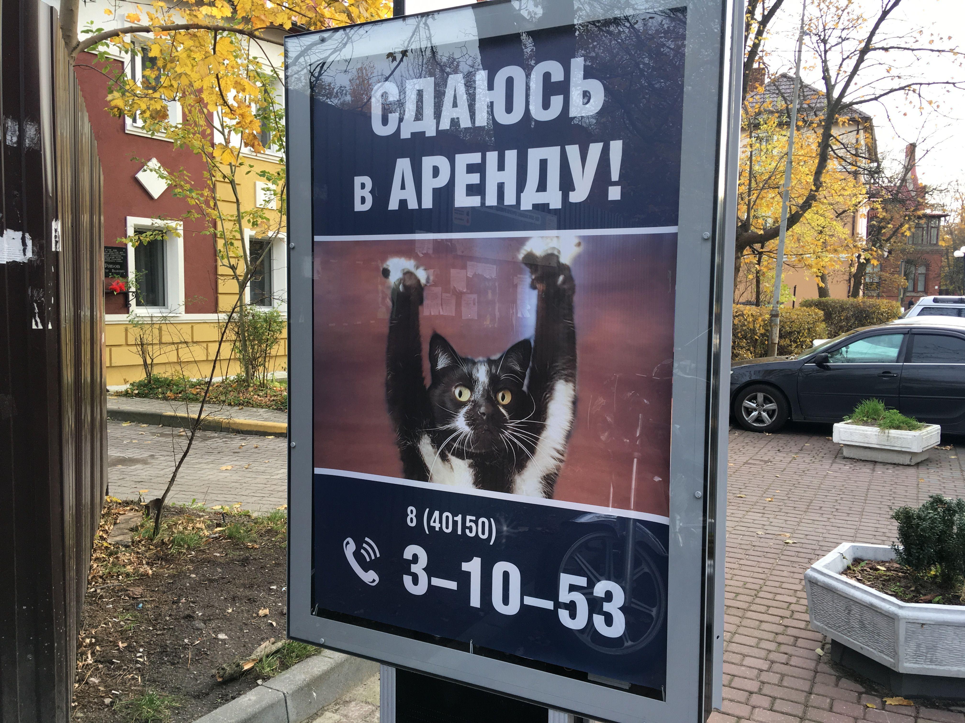 Реклама с котом