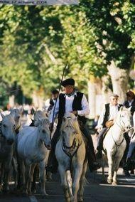 2cc1e689f392 Elevage de chevaux en Camargue   Camargue Découverte   chevaux ...